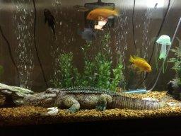 Fish Tank Bubbler