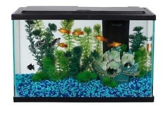 An aqua culture 5 gal tank
