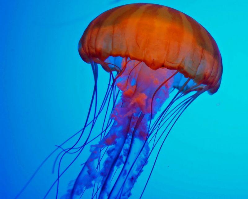 Fish Tank Ornaments Colourful Jellyfish