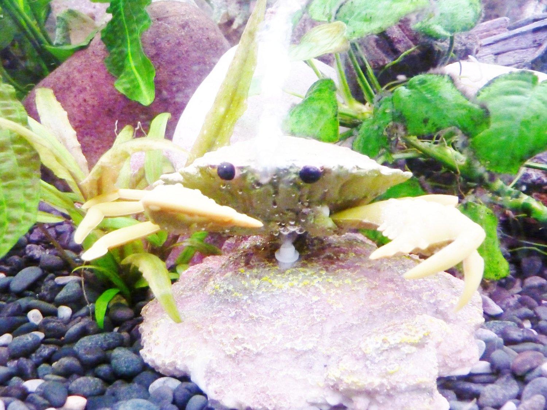 fish-tank-ornament