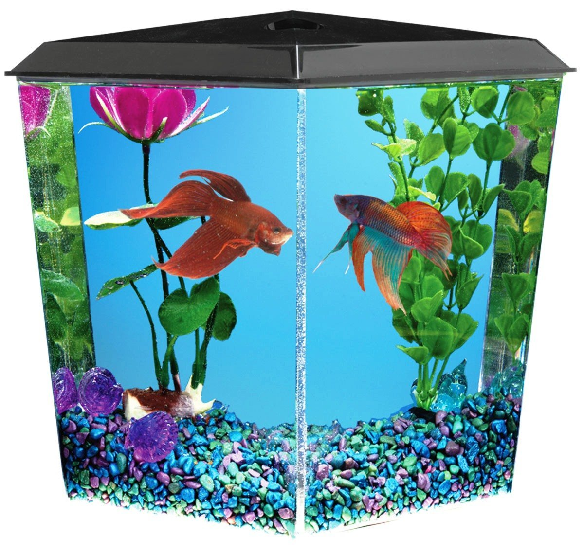 Corner fish tanks aquariums pentagon bow front for 5 gallon fish tanks
