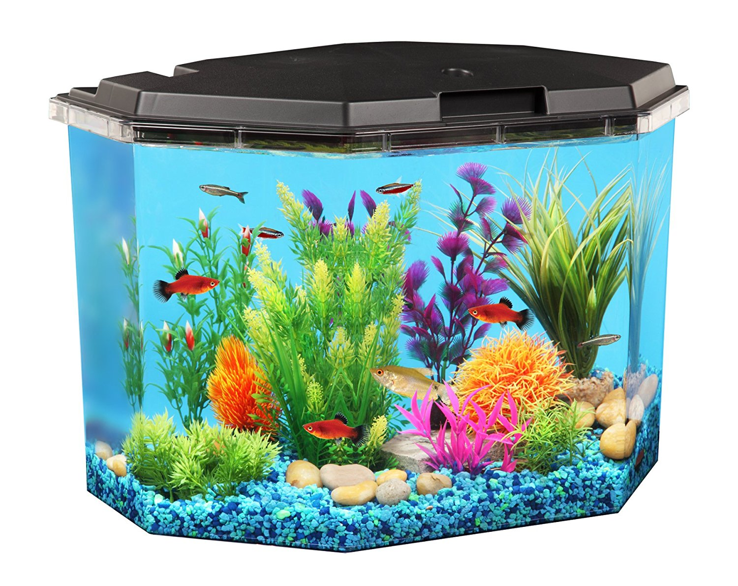 Aquaview 6 5 Gallon Fish Tank With Filter