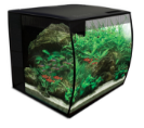 9 gallon aquarium